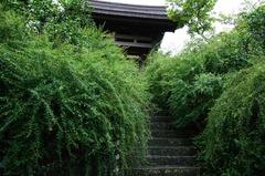 110921海蔵寺ハギ