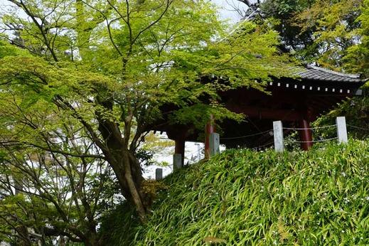130401妙本寺新緑