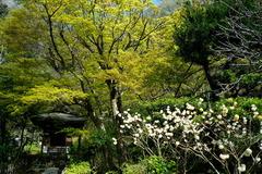180329円覚寺新緑