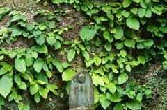 110601東慶寺イワタバコ