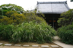 150916宝戒寺ハギ2