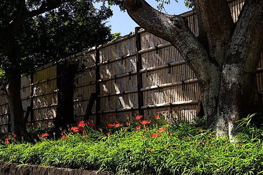 200928鶴岡八幡宮ヒガンバナ2