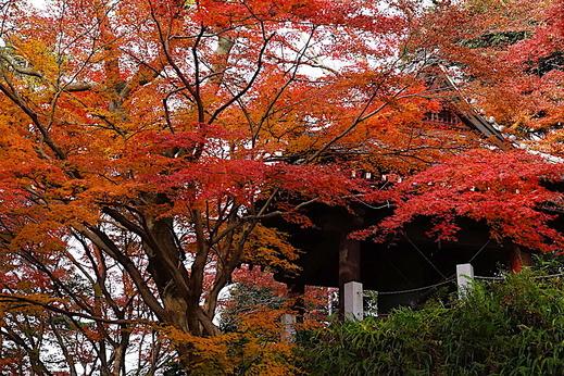 201219妙本寺紅葉2