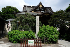 160718妙隆寺フヨウ2