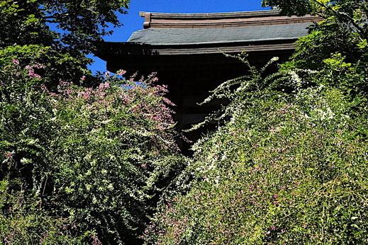 180928海蔵寺ハギ