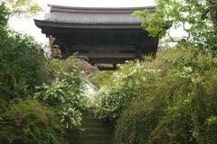 090919海蔵寺ハギ1