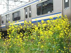 090401横須賀線ナノハナ
