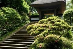090523円覚寺サツキ