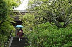 110423東慶寺新緑