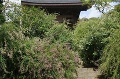 120918海蔵寺ハギ1