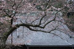 120403妙本寺