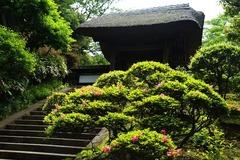 140528円覚寺サツキ
