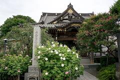 170827妙隆寺フヨウ2