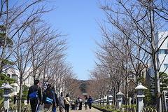 200318段葛サクラ