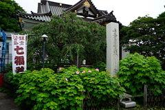 170727妙隆寺フヨウ2