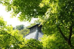 080430光則寺新緑
