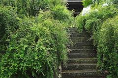 160914海蔵寺ハギ