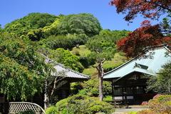 160504海蔵寺新緑