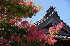 120823本覚寺サルスベリ2