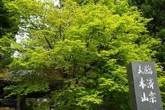 150412円覚寺新緑1