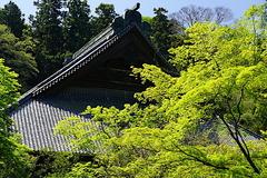 170420妙本寺新緑1
