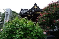 160830妙隆寺フヨウ、サルスベリ