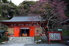 180128荏柄天神社ウメ3
