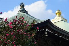 151112長勝寺サザンカ