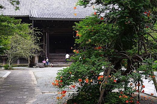 200716妙本寺ノウゼンカズラ