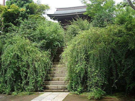 150903海蔵寺ハギ