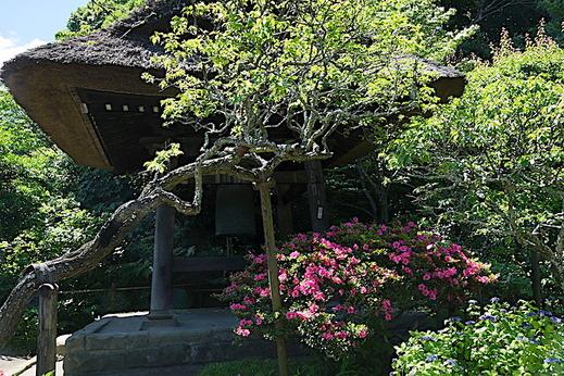 180520東慶寺サツキ