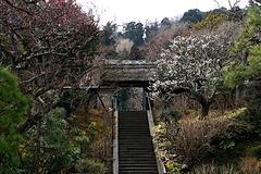180226東慶寺ウメ4