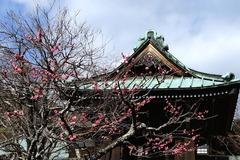 150221海蔵寺ウメ2