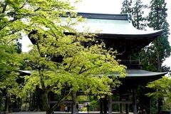 150412円覚寺新緑2