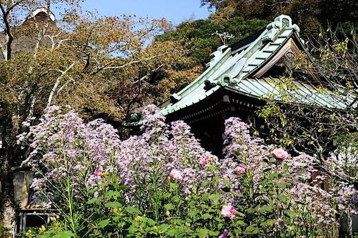 181010海蔵寺シオン