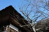 060211海蔵寺