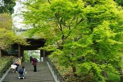 120420円覚寺新緑