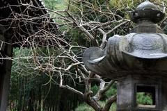 110212安国論寺ウメ2