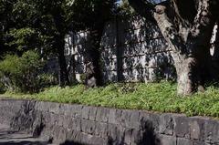 110924八幡宮ヒガンバナ