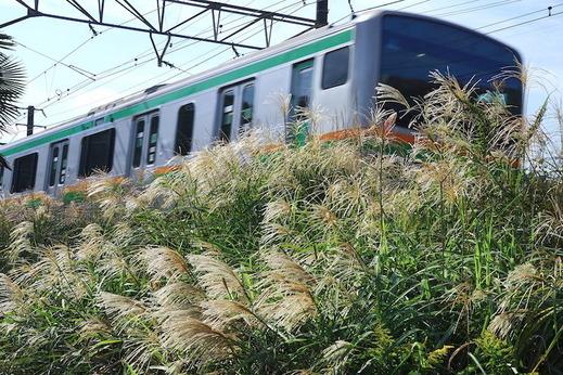 181010横須賀線ススキ