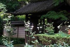 160919瑞泉寺シュウメイギク