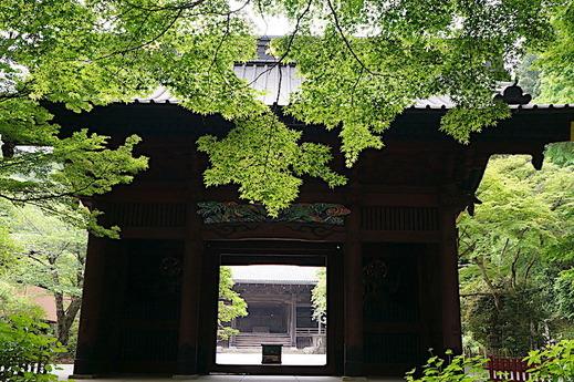 180502妙本寺新緑3