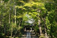 140413寿福寺新緑