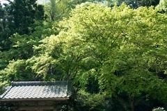 110420妙本寺新緑2