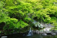 130411長谷寺新緑