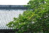 060729本興寺サルスベリ