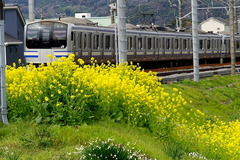 160327横須賀線ナノハナ