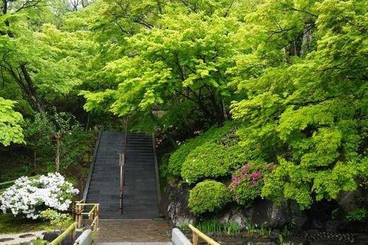140421長谷寺新緑