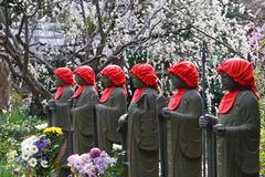 200215常立寺シダレウメ2
