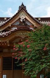 060916妙隆寺サルスベリ